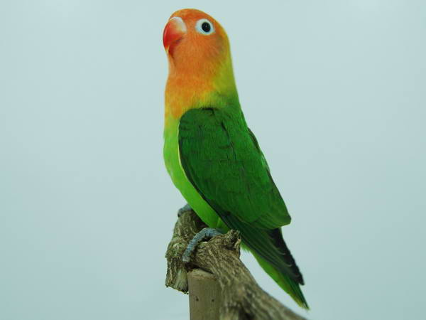 more on rainbow birds julian o dea